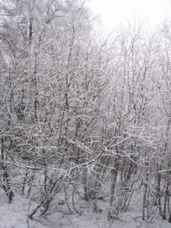 Snow at Kielder 1
