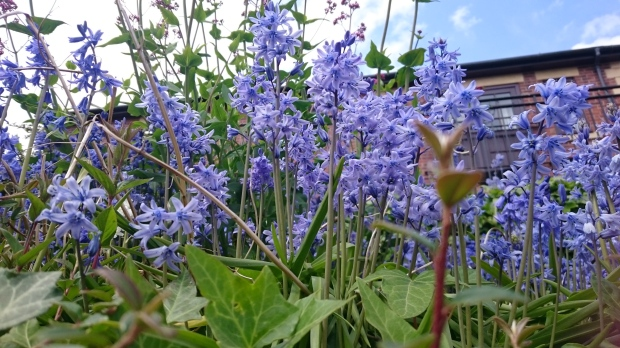 Bluebells_in_the_city[1]