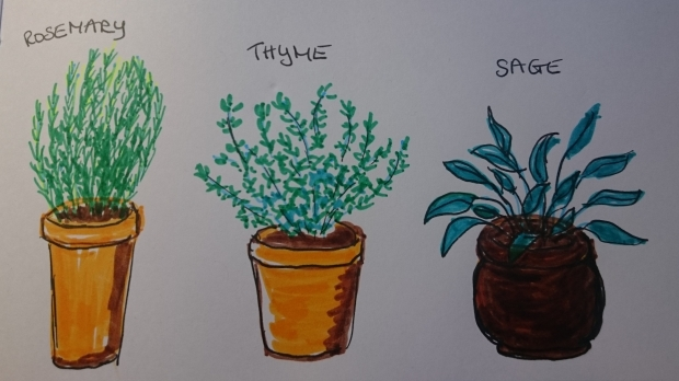 potted herbs drawing by Amanda Jane Ogden