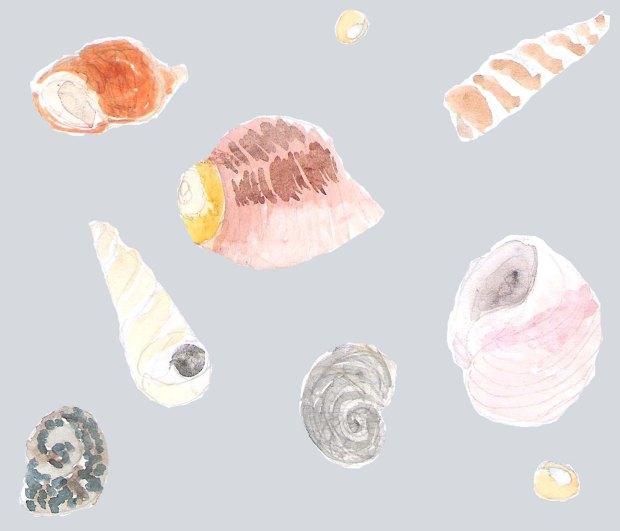 Celaphopods